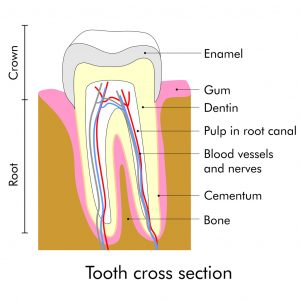 Root canals in Pasadena from our practice are no longer frightening, and they actually cure pain, rather than causing it.